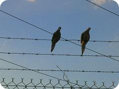 Copy Birds